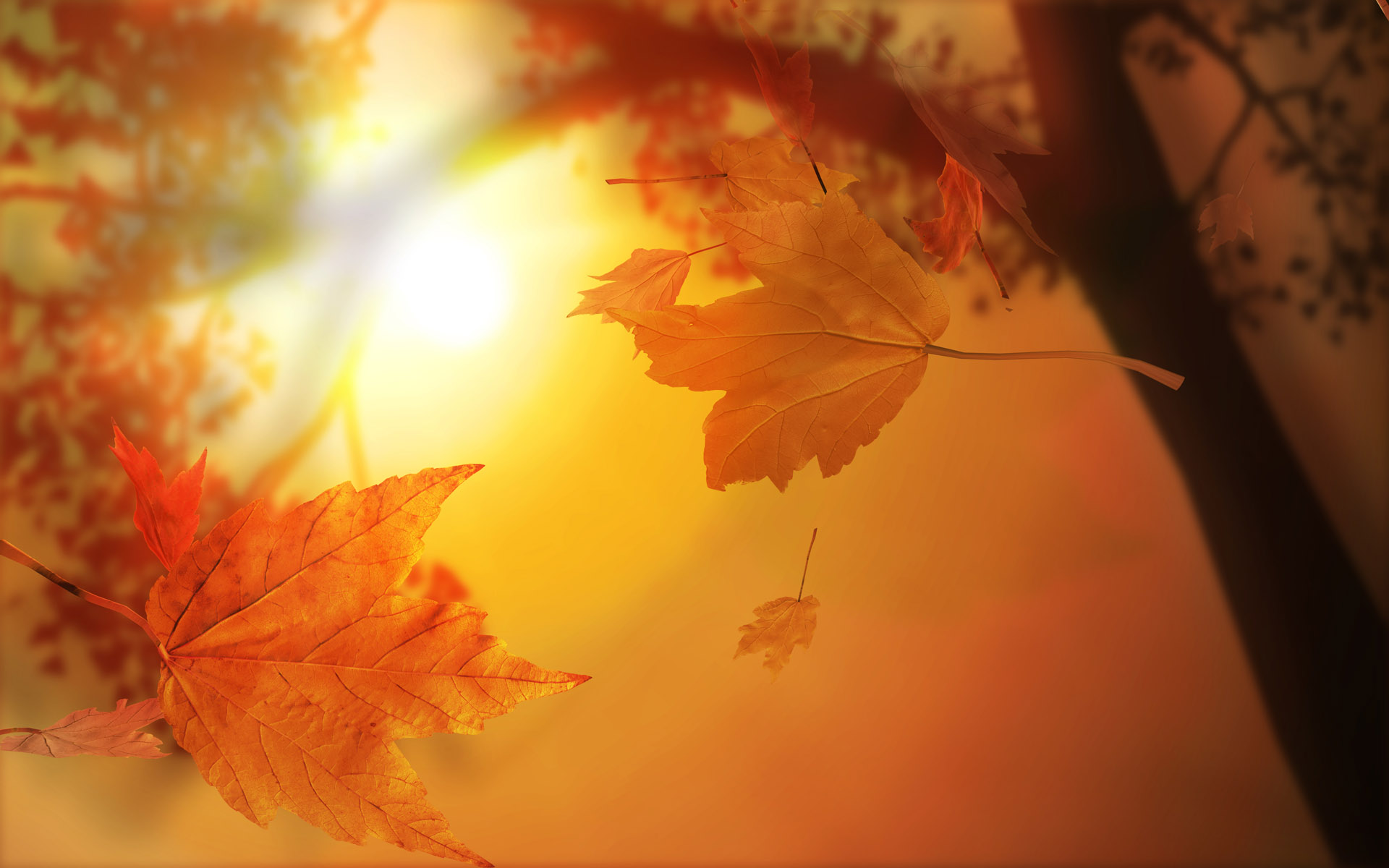 Autumn-Wallpapers-4